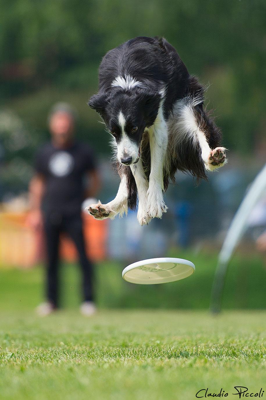 fotografia-cani-che-volano-frisbee-claudio-piccoli-03
