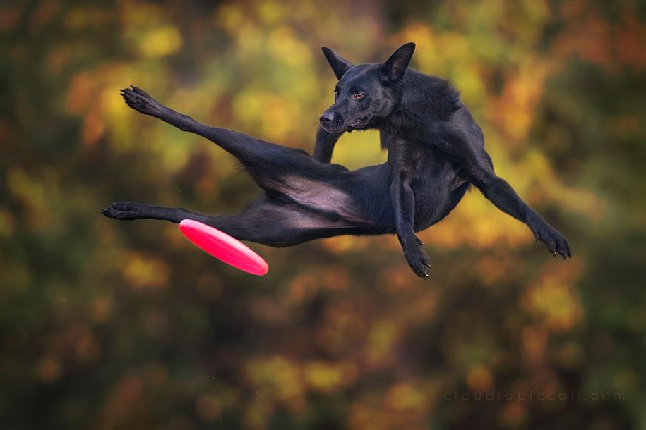 fotografia-cani-che-volano-frisbee-claudio-piccoli-05