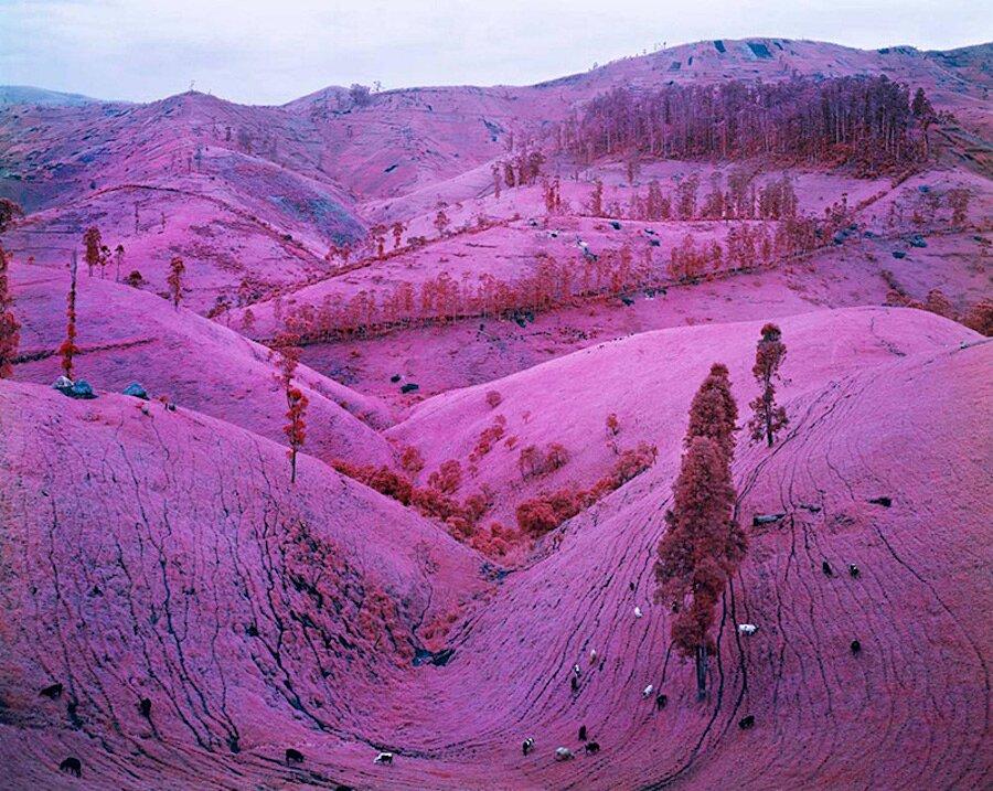 fotografia-paesaggi-rosa-congo-infrarossi-infra-richard-mosse-09