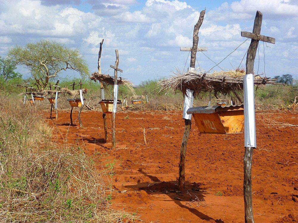recinti-arnie-api-contro-elefanti-africa-1