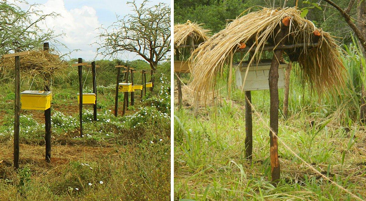 recinti-arnie-api-contro-elefanti-africa-2