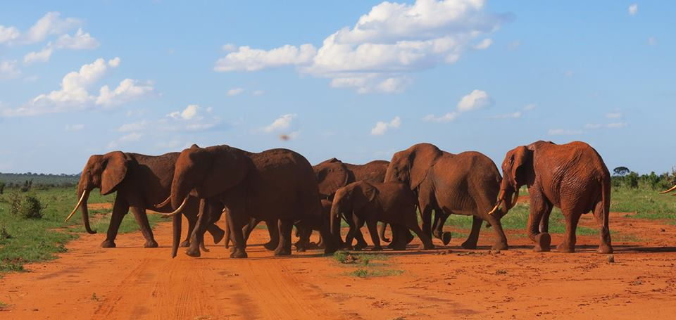 recinti-arnie-api-contro-elefanti-africa-8