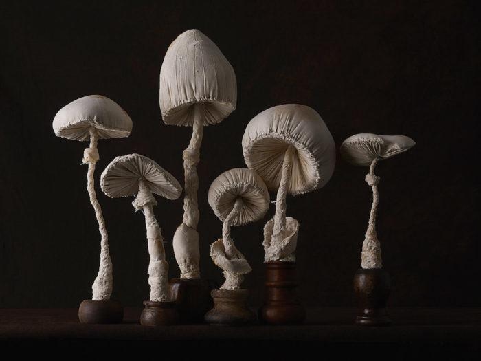 sculture-funghi-stoffa-mister-finch-02