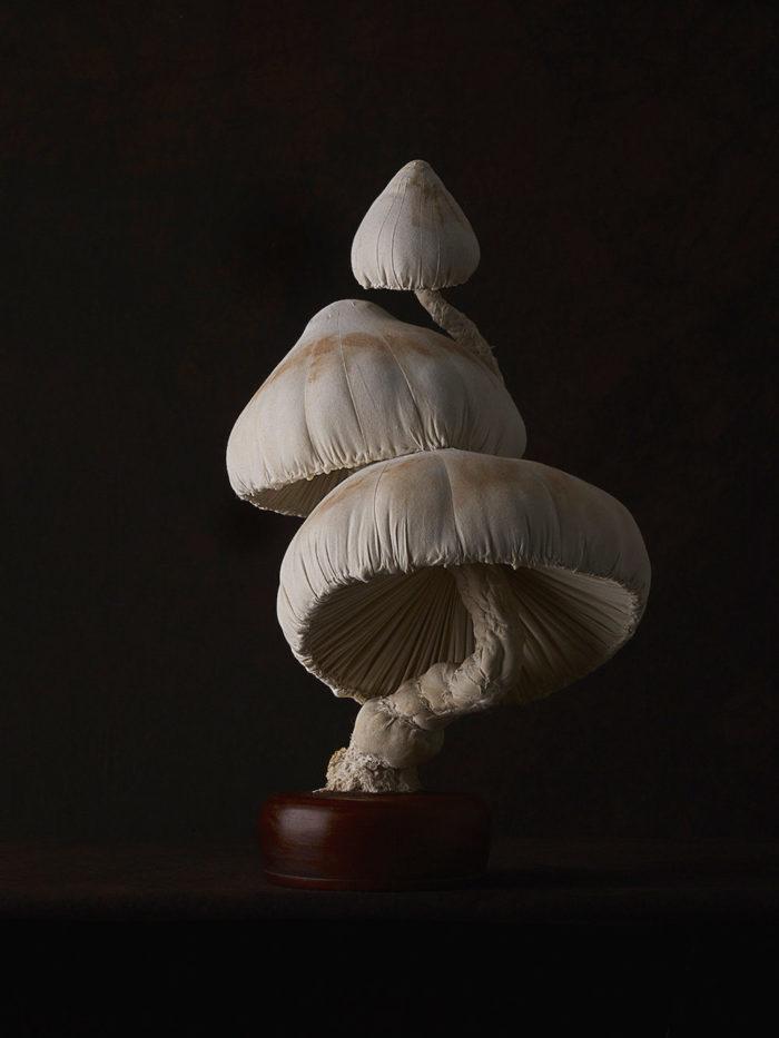 sculture-funghi-stoffa-mister-finch-03