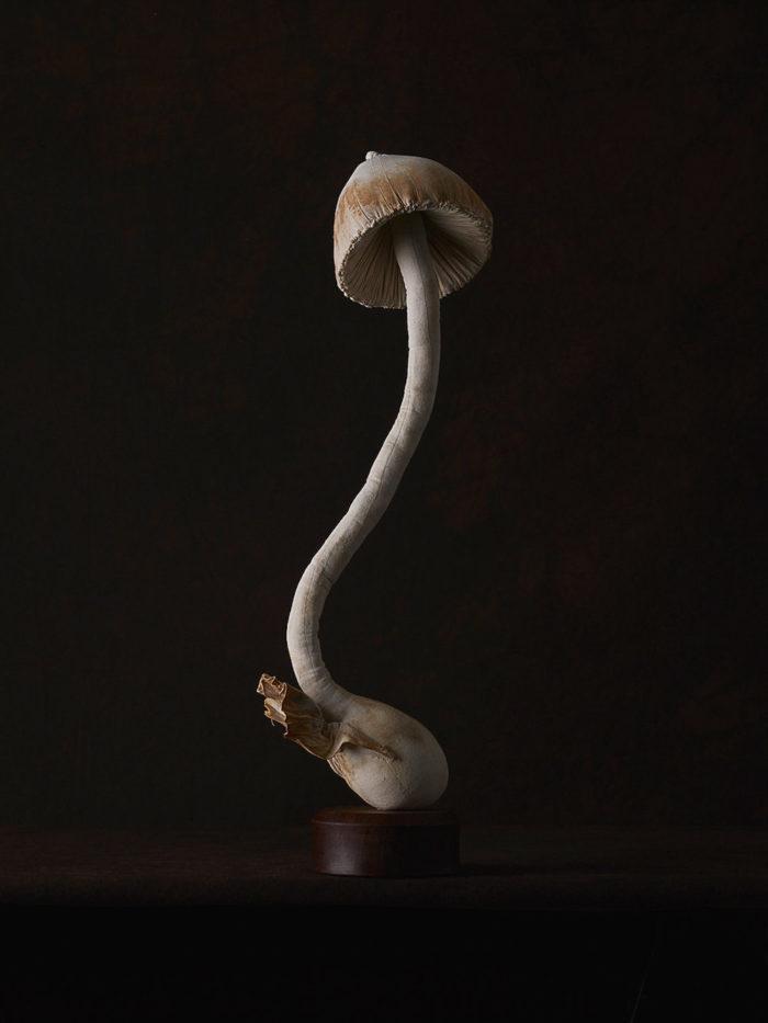 sculture-funghi-stoffa-mister-finch-04