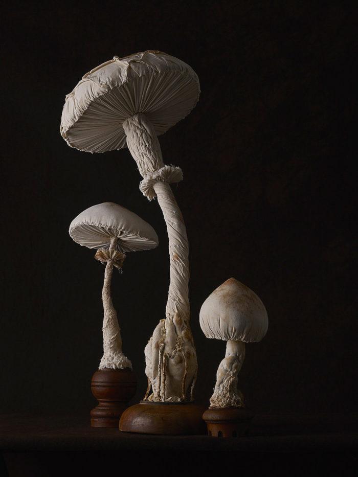 sculture-funghi-stoffa-mister-finch-10