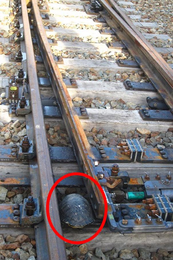 sottopassaggi-tartarughe-treno-ferrovie-giapponesi-2
