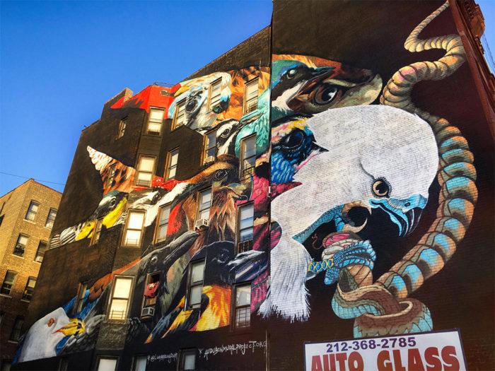 street-art-uccelli-rari-audubon-mural-project-3