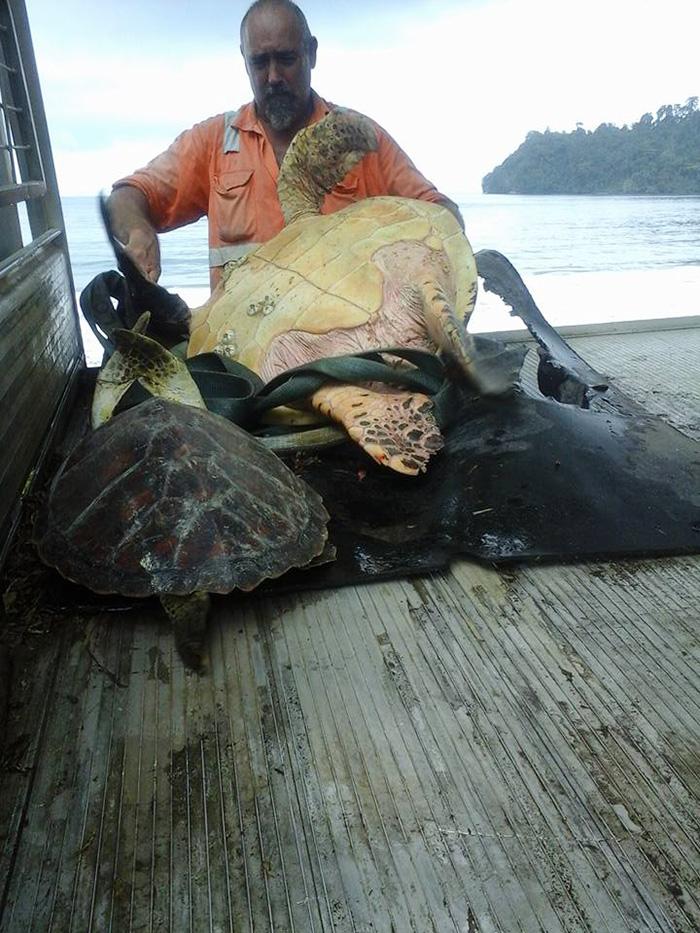 uomo-salva-tartarughe-marine-arron-culling-nuova-guinea-1