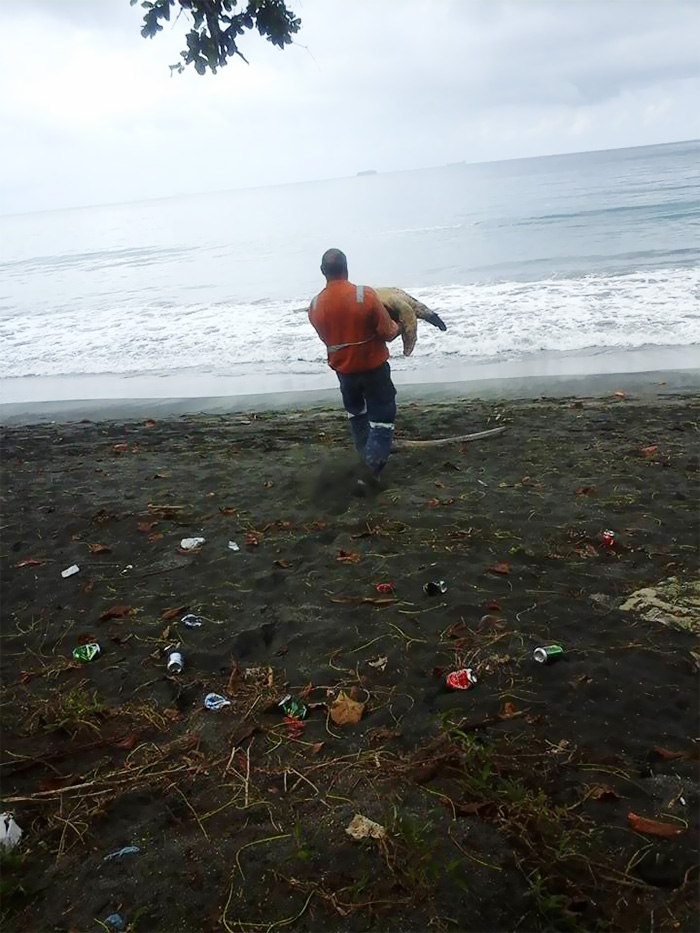 uomo-salva-tartarughe-marine-arron-culling-nuova-guinea-2
