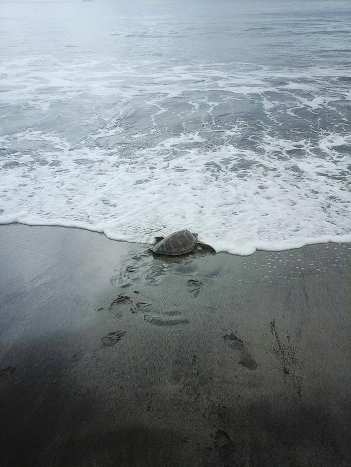 uomo-salva-tartarughe-marine-arron-culling-nuova-guinea-4