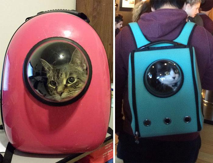 zaino porta gatto keblog