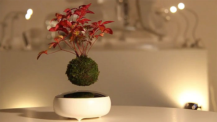 air-bonsai-sospeso-in-aria-1