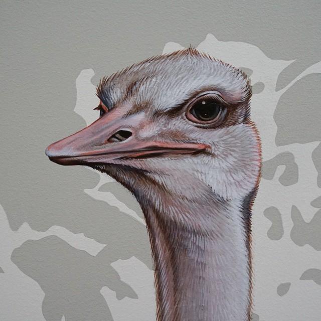 murale-dipinti-243-specie-uccelli-jane-kim-03