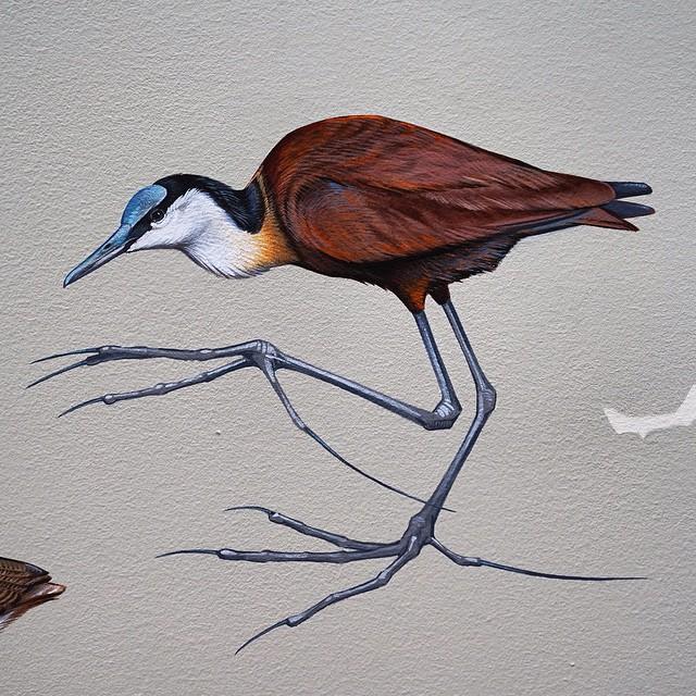 murale-dipinti-243-specie-uccelli-jane-kim-07