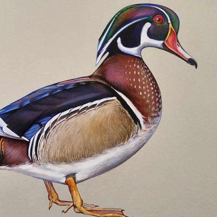 murale-dipinti-243-specie-uccelli-jane-kim-08