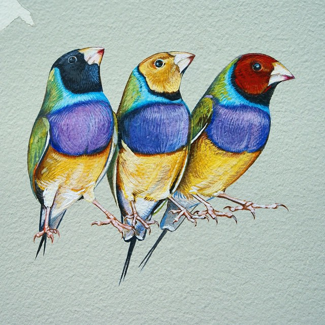 murale-dipinti-243-specie-uccelli-jane-kim-10