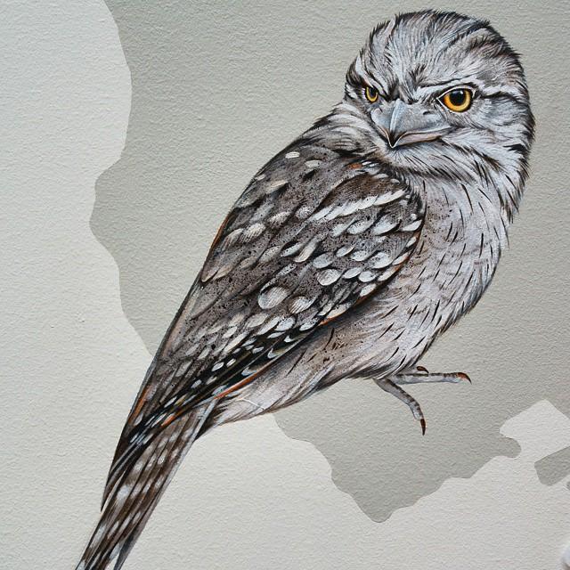 murale-dipinti-243-specie-uccelli-jane-kim-11