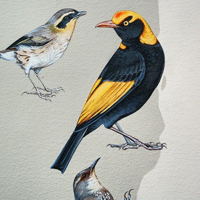 murale-dipinti-243-specie-uccelli-jane-kim-12