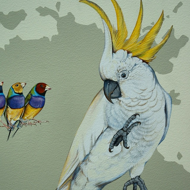 murale-dipinti-243-specie-uccelli-jane-kim-13