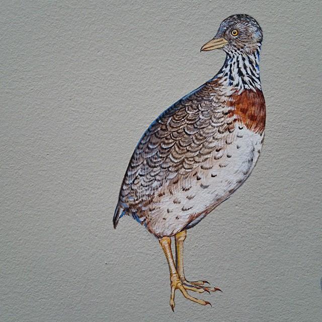 murale-dipinti-243-specie-uccelli-jane-kim-14