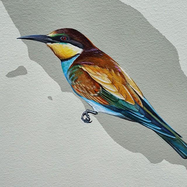 murale-dipinti-243-specie-uccelli-jane-kim-15