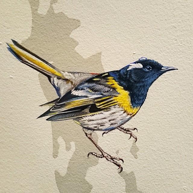 murale-dipinti-243-specie-uccelli-jane-kim-16