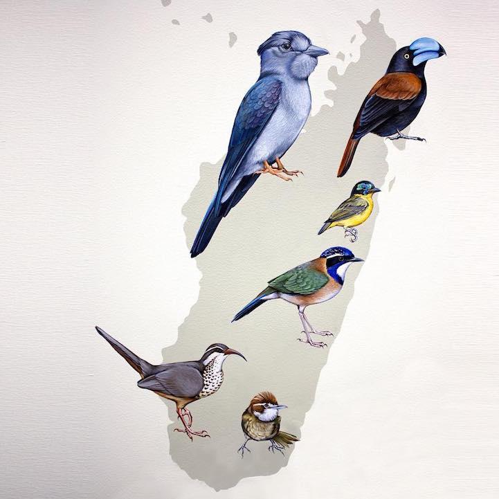 murale-dipinti-243-specie-uccelli-jane-kim-19