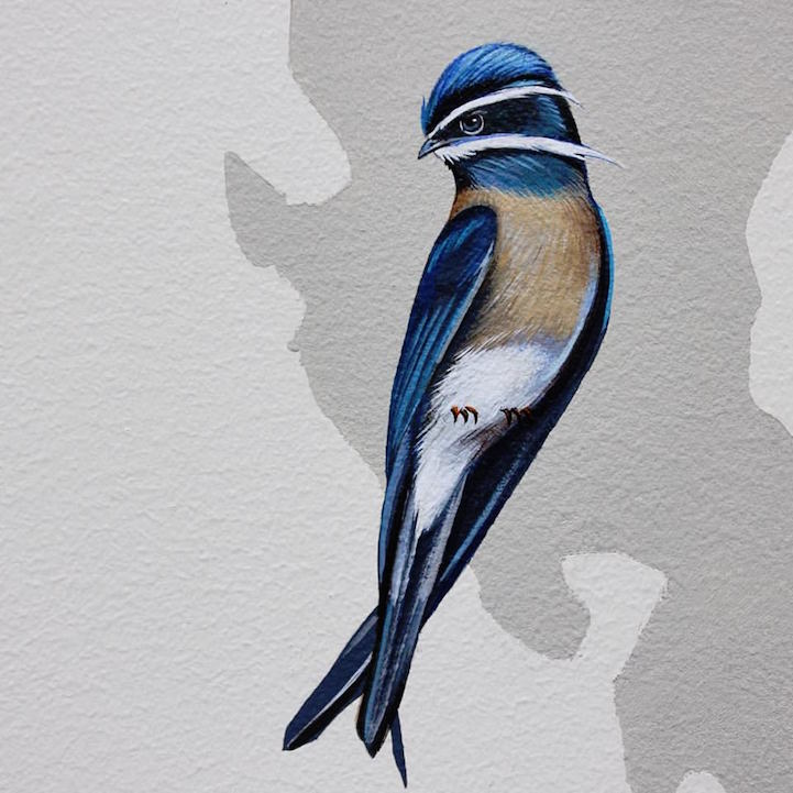 murale-dipinti-243-specie-uccelli-jane-kim-22