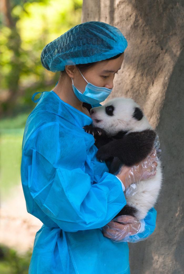abbracci-coccole-panda-lavoro-cina-1