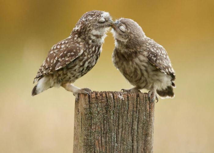 animali-che-si-baciano-san-valentino-03