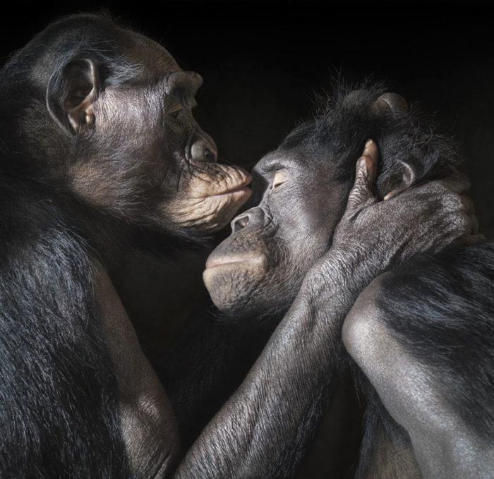animali-che-si-baciano-san-valentino-04