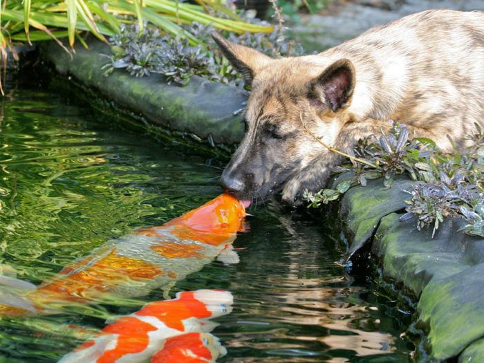 animali-che-si-baciano-san-valentino-05