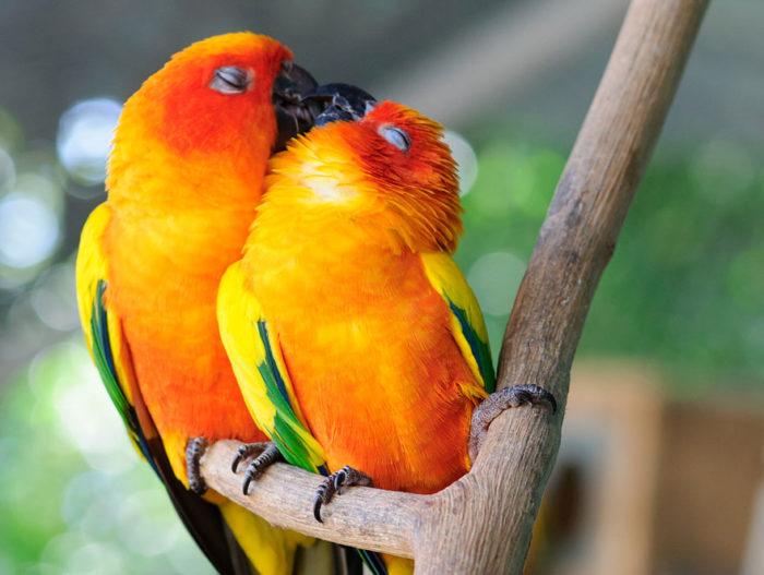 animali-che-si-baciano-san-valentino-07