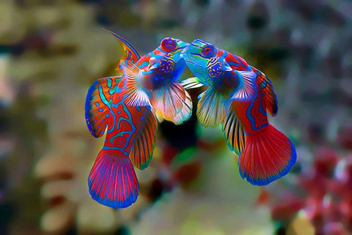 animali-che-si-baciano-san-valentino-08