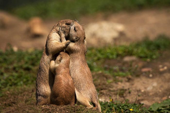 animali-che-si-baciano-san-valentino-13