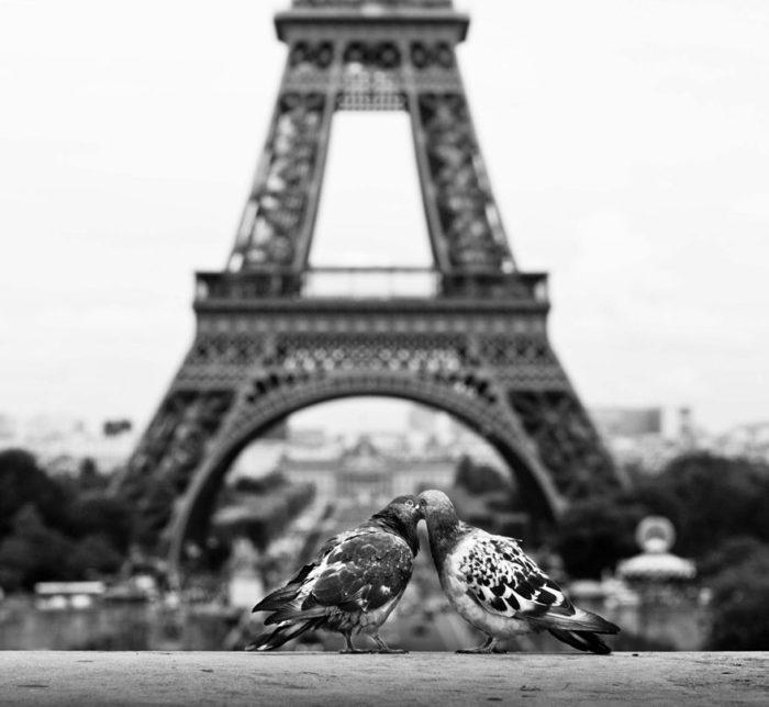 animali-che-si-baciano-san-valentino-14