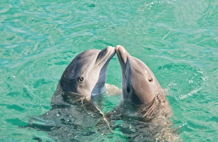 animali-che-si-baciano-san-valentino-19