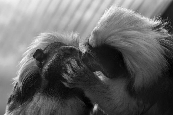 animali-che-si-baciano-san-valentino-20