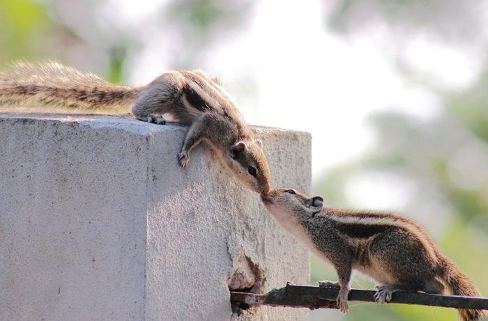 animali-che-si-baciano-san-valentino-21