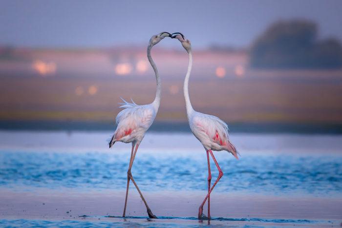 animali-che-si-baciano-san-valentino-22