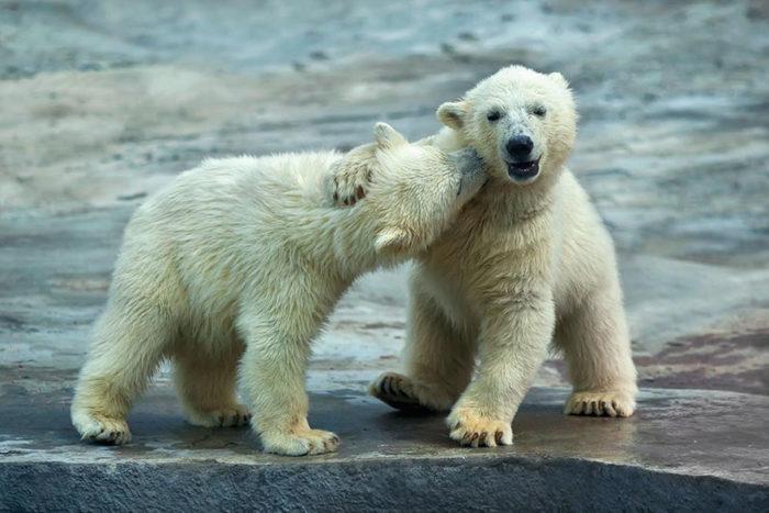 animali-che-si-baciano-san-valentino-24
