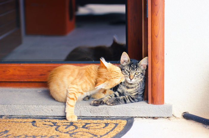 animali-che-si-baciano-san-valentino-27