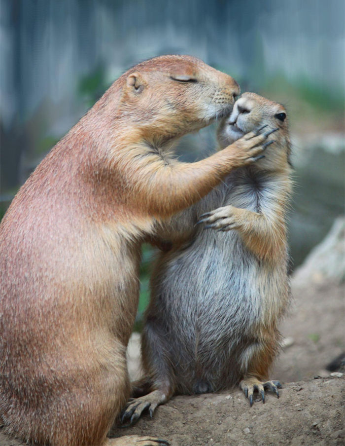 animali-che-si-baciano-san-valentino-34
