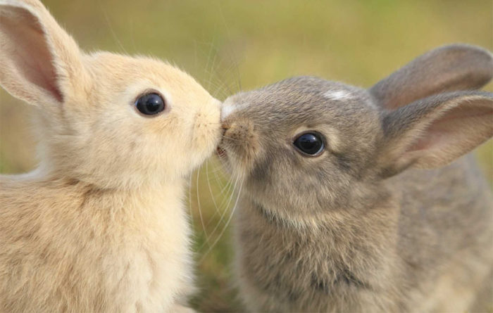 animali-che-si-baciano-san-valentino-38
