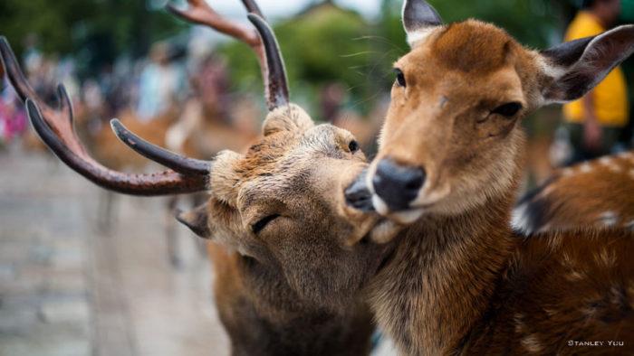 animali-che-si-baciano-san-valentino-40