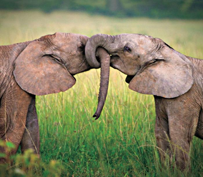 animali-che-si-baciano-san-valentino-41