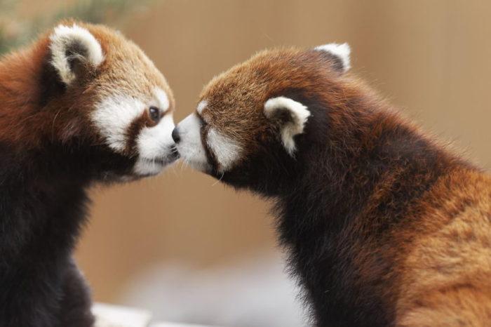 animali-che-si-baciano-san-valentino-42
