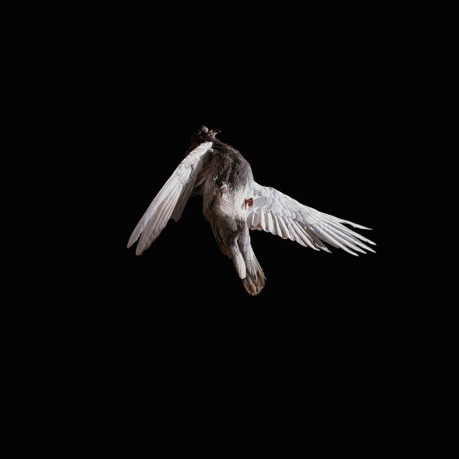 dipinti-surreali-cosmonauti-uccelli-jeremy-geddes-07
