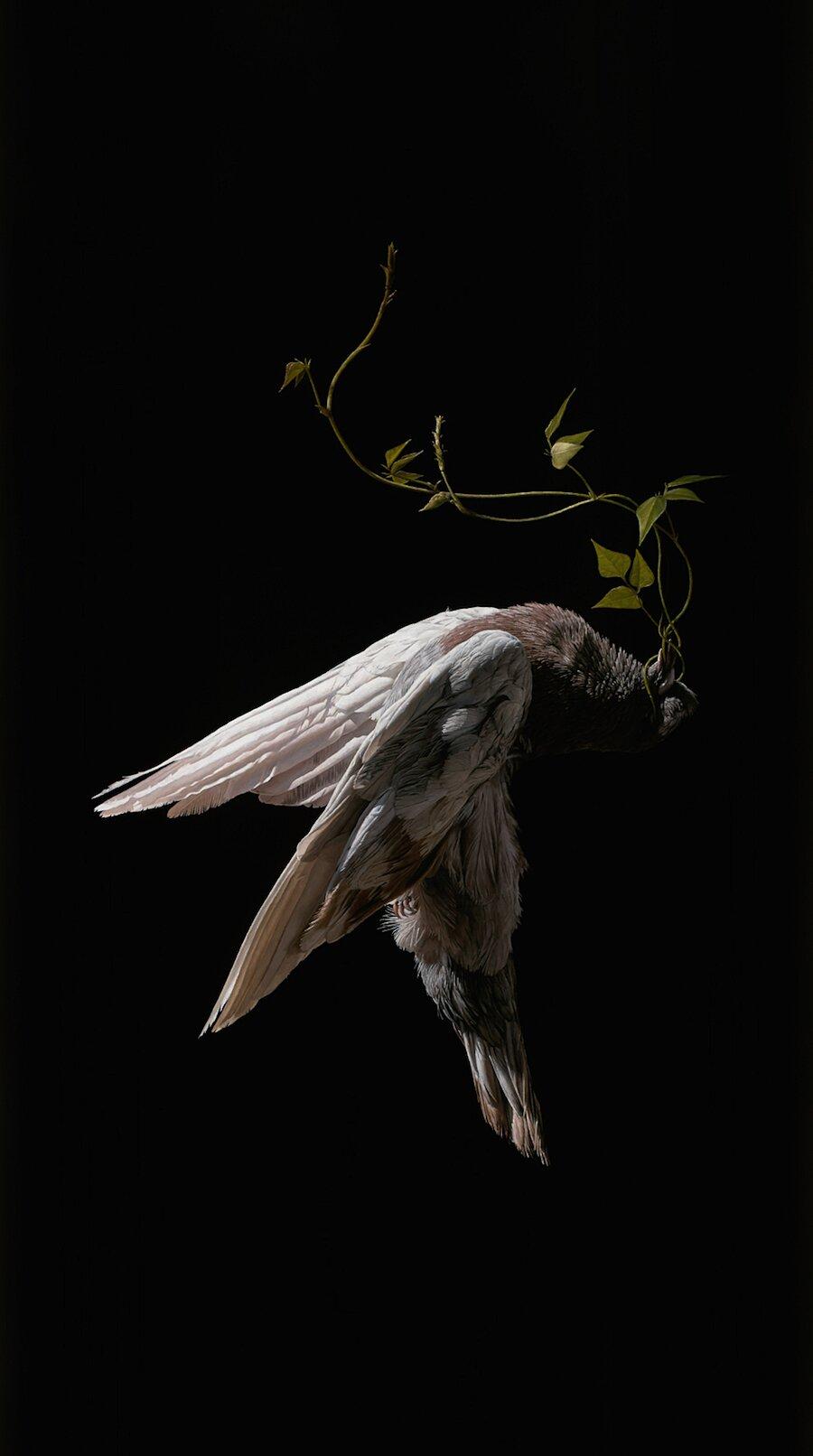 dipinti-surreali-cosmonauti-uccelli-jeremy-geddes-12